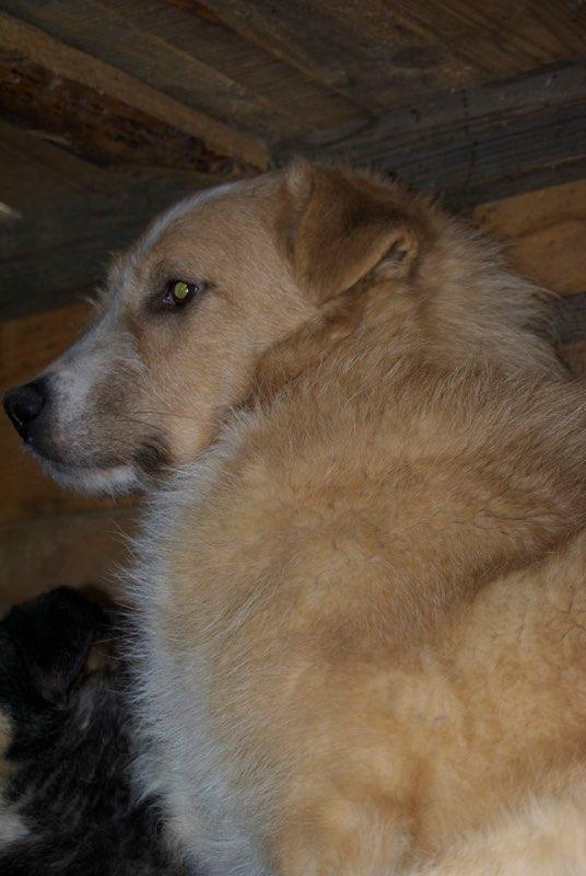 BERLIOZ - PLUS DE 4 ANS DE box !! mâle croisé de taille moyenne, né environ en juin 2011 ( PASCANI ) - REMEMBER ME LAND - Adopté par Marylene (28)  - Page 2 Berlio10
