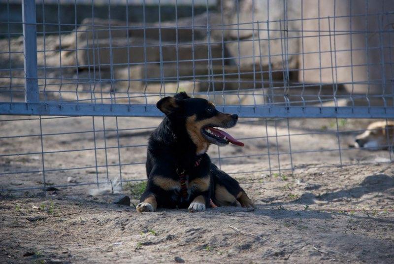LEGOLAS - mâle, croisé, petite à moyenne, né environ en avril 2011 - REMEMBER ME LAND - ADOPTEE PAR SABINE (38) Legola13