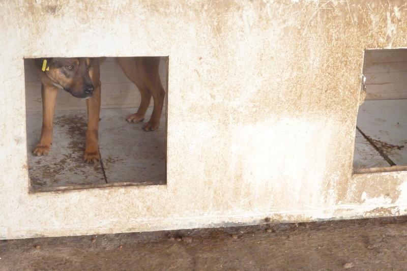 OSCAR - mâle, né environ avril 2012, taille moyenne - En FA chez DarkKing (42) replacé en FA chez Sylvie (02)  - Page 2 P1060120