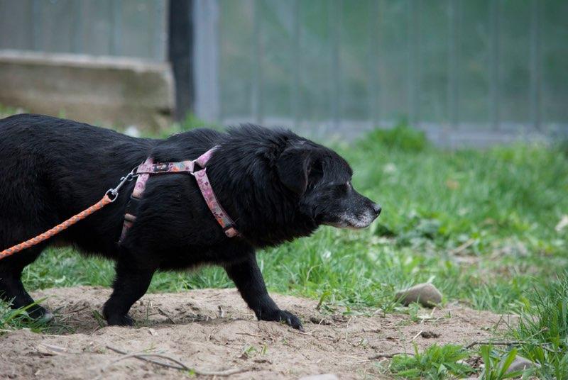 SHERLOCK, mâle, croisé de petite taille, né environ en 2010 - Remember Me Land - Adopté par Jeannine (Belgique) Sherlo10