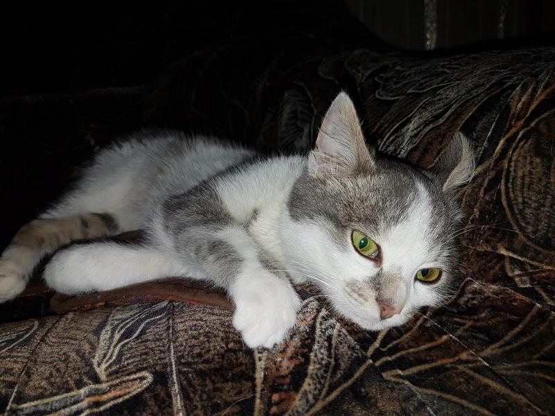 VOYOU, chaton mâle, né en Août/septembre 2016 (Pascani) - en FA chez Abysse (dpt92) - ADOPTE PAR VALERIE (92) 20170213