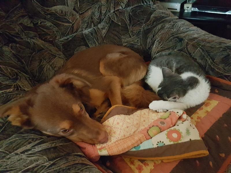 VOYOU, chaton mâle, né en Août/septembre 2016 (Pascani) - en FA chez Abysse (dpt92) - ADOPTE PAR VALERIE (92) 20170219