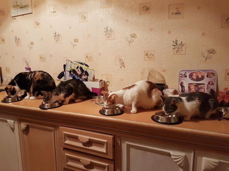 VOYOU, chaton mâle, né en Août/septembre 2016 (Pascani) - en FA chez Abysse (dpt92) - ADOPTE PAR VALERIE (92) 20170221