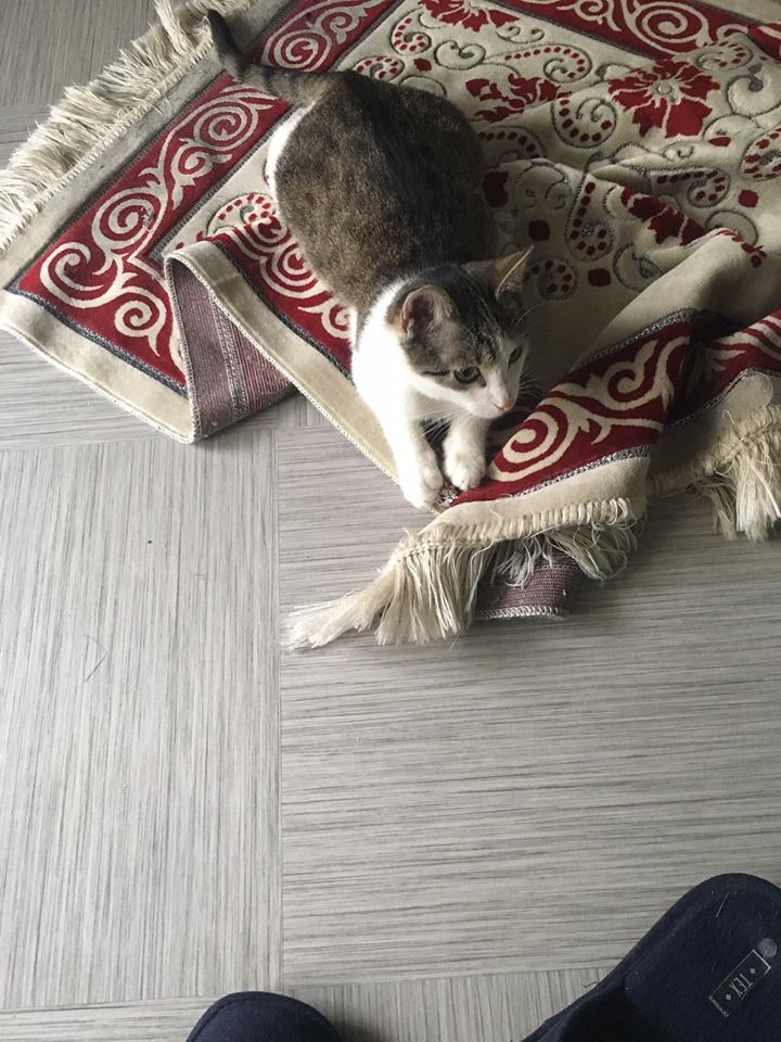 MILKA (ex CLOCHARD) - chaton mâle, né en juin 2016 - En FA chez Abysse (92) - Adopté par Imen (78) Clocha11