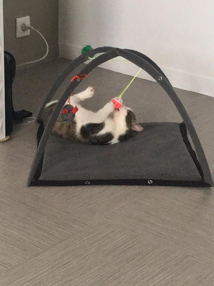 MILKA (ex CLOCHARD) - chaton mâle, né en juin 2016 - En FA chez Abysse (92) - Adopté par Imen (78) Clocha13