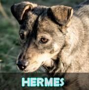Les séniors en roumanie en un clin d'oeil Hermes10