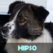 Les adultes de taille moyenne en Roumanie en un clin d'oeil Hipso10