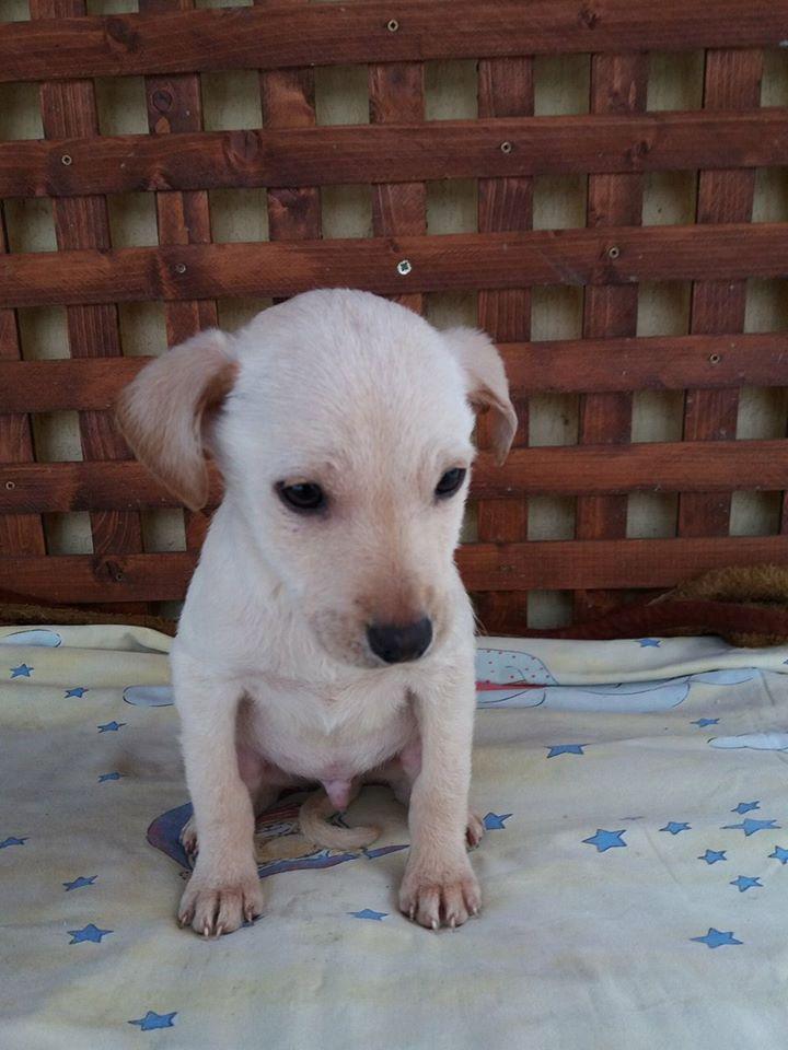 KEOO, chiot mâle, né environ en novembre 2016 - décédé Keoo10