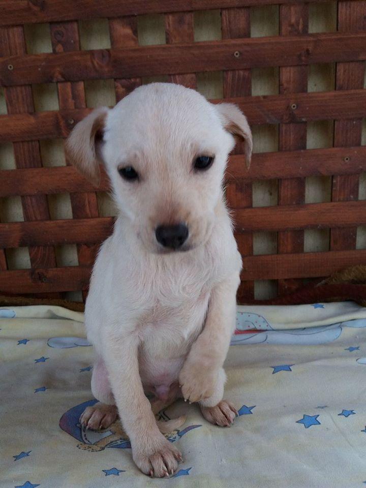 KEOO, chiot mâle, né environ en novembre 2016 - décédé Keoo110