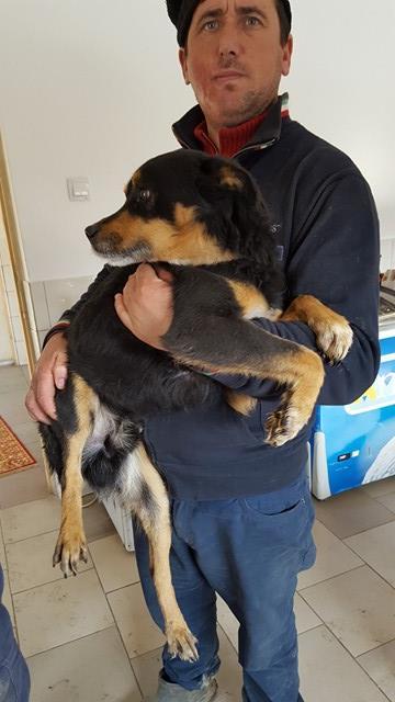 LEGOLAS - mâle, croisé, petite à moyenne, né environ en avril 2011 - REMEMBER ME LAND - ADOPTEE PAR SABINE (38) Legola10