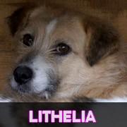 Association Remember Me France : sauver et adopter un chien roumain Lithel10