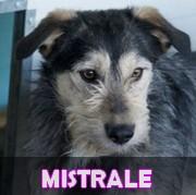 Les adultes de taille moyenne en Roumanie en un clin d'oeil Mistra10