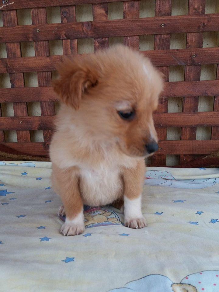 MISTY, chiot femelle, née environ en octobre 2016 - Adoptée par Fapsi (Belgique) - DECEDEE Misty110