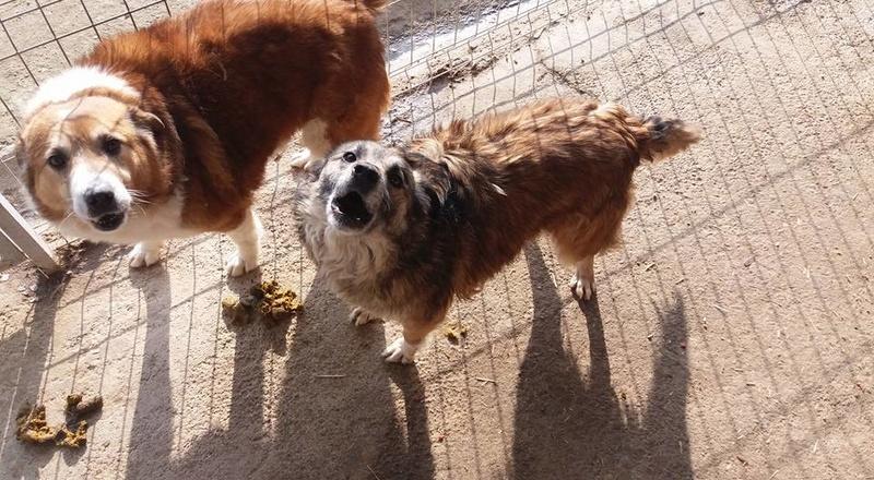 OITA - femelle de taille moyenne, née en 2012 (Pascani) - Adoptée par Nicole (27)  Oita_e13