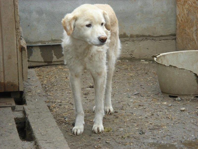 TAIKO, mâle, taille moyenne , né environ en 2010 (chez Anda et Alina) - Adopté par Monique (81) Taiko10
