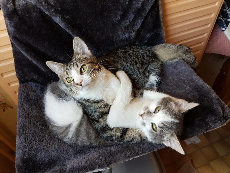 VENUS (ex TITI) - chaton femelle, née avril 2016 - En FA chez Abysse (92) - ADOPTEE PAR ANNE et FATLUM (depart94) - Page 2 Titi_e10