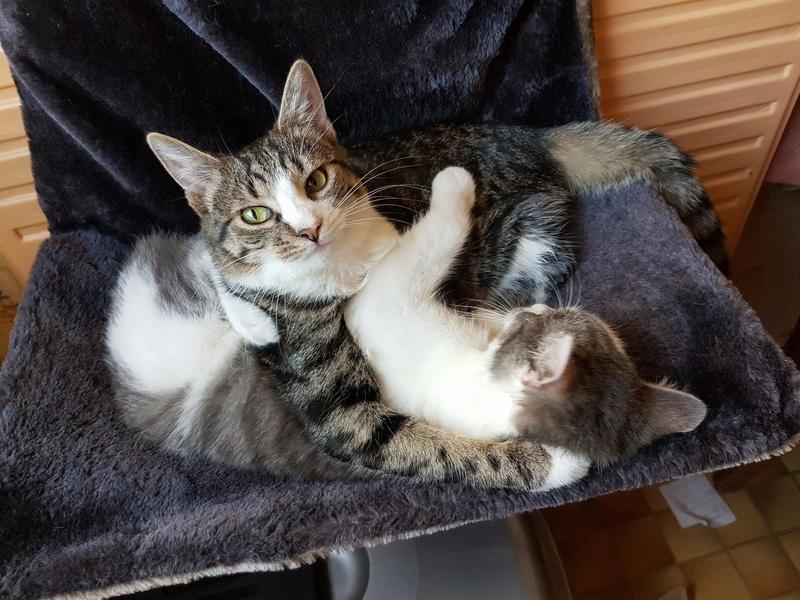 VENUS (ex TITI) - chaton femelle, née avril 2016 - En FA chez Abysse (92) - ADOPTEE PAR ANNE et FATLUM (depart94) - Page 2 Voyou_13
