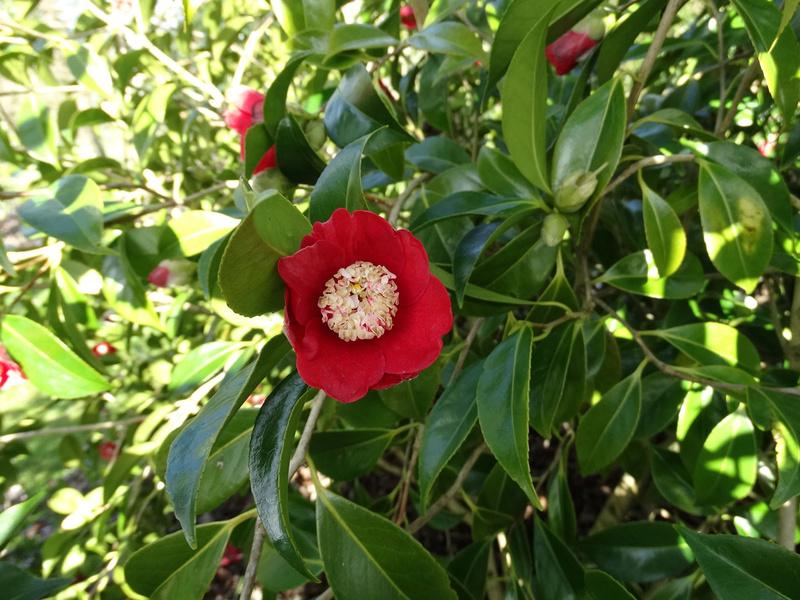 deux ou trois fleurs dans le vent - Page 3 Bokuha10