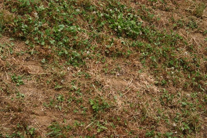 semis direct d'orge-avoine dans du trèfles-luzerne Sd_rac11