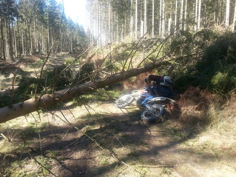 montagne noire dimanche 26/02 trail (sportif) 20170211