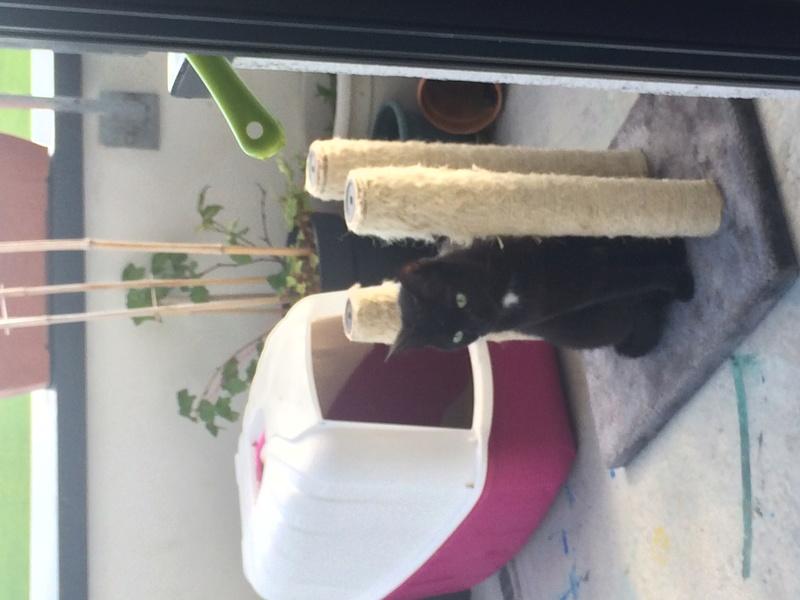 Maëlig, femelle européenne noire estimée née 19/04/2016 - Page 11 Img_2810