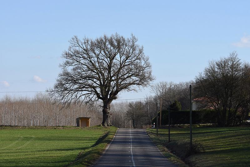 l'abris bus abrite les ecoliers,l'arbre abrite l'abris bus +original 102410