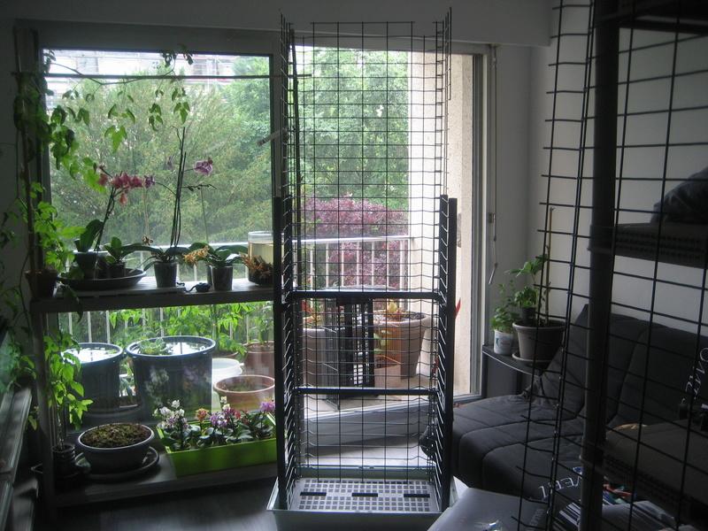 Présentoir pour orchidées et autres Img_0111