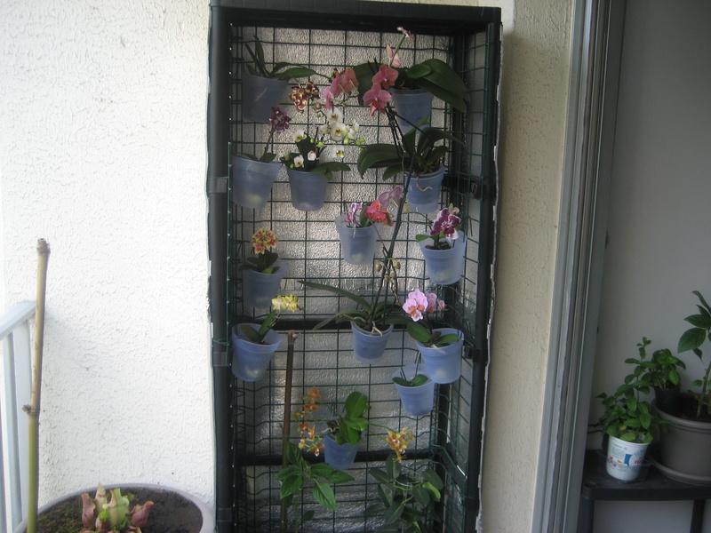 Support orchidées fait maison Img_0113
