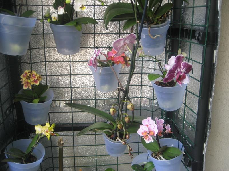 Support orchidées fait maison Img_0115