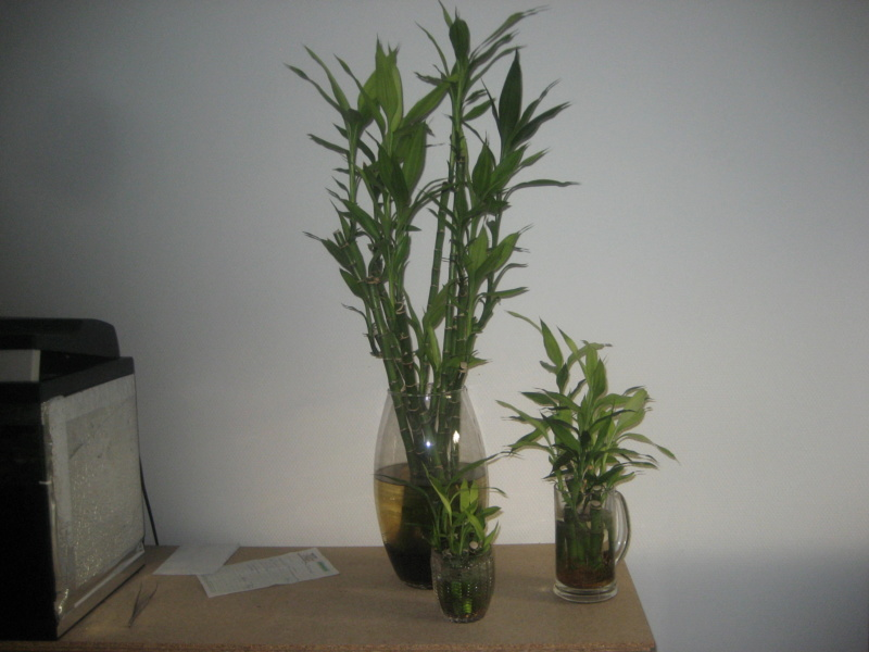GILLES17 - Mes plantyounettes. Img_1545