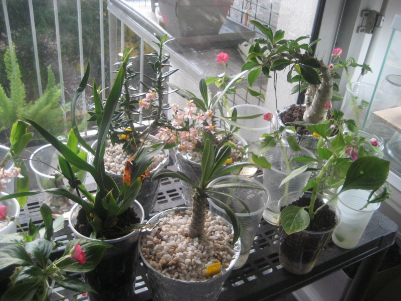 GILLES17 - Mes plantyounettes. Img_1546
