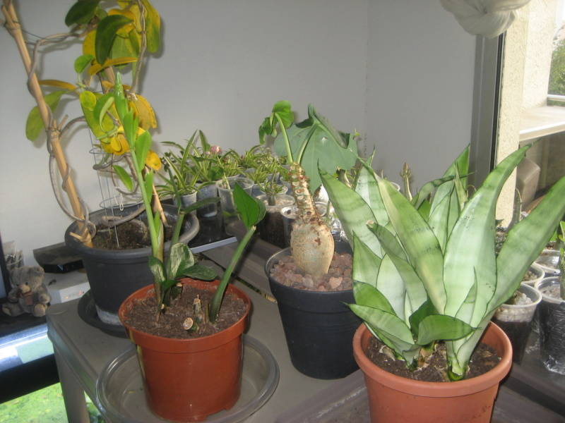 GILLES17 - Mes plantyounettes. Img_1552