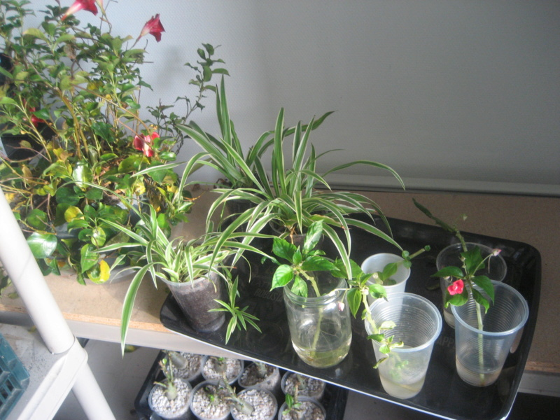 GILLES17 - Mes plantyounettes. Img_1555