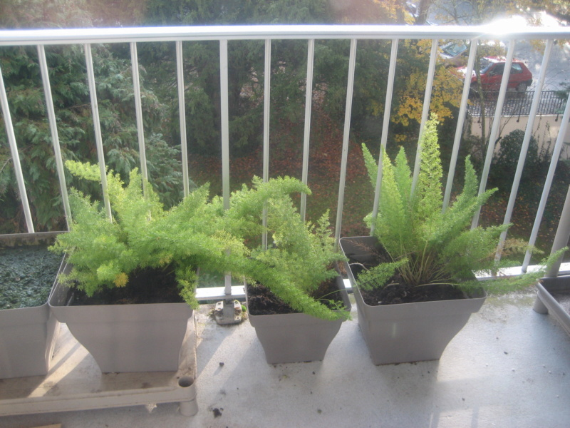 GILLES17 - Mes plantyounettes. Img_1561