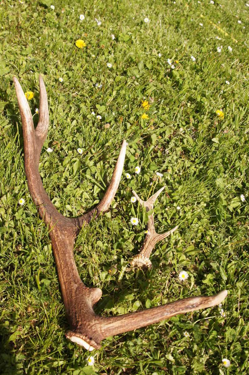 Surprise en forêt 05_20110