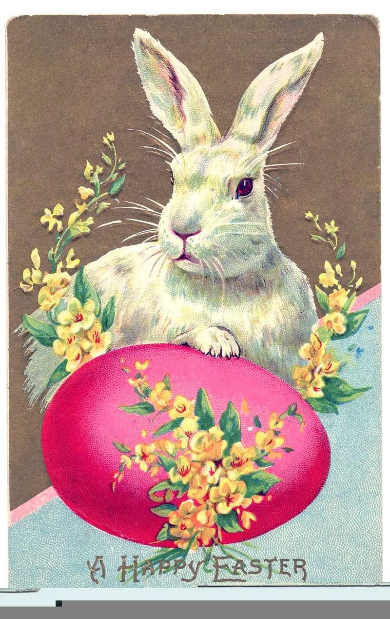 Hog's Head - Page 33 Bunny-11