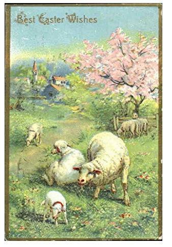 Hog's Head - Page 33 Sheep10