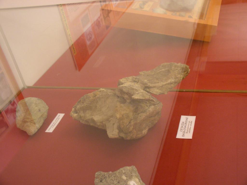 Exposición especies de la transversal pirenaica y algunas cosas más _p101025