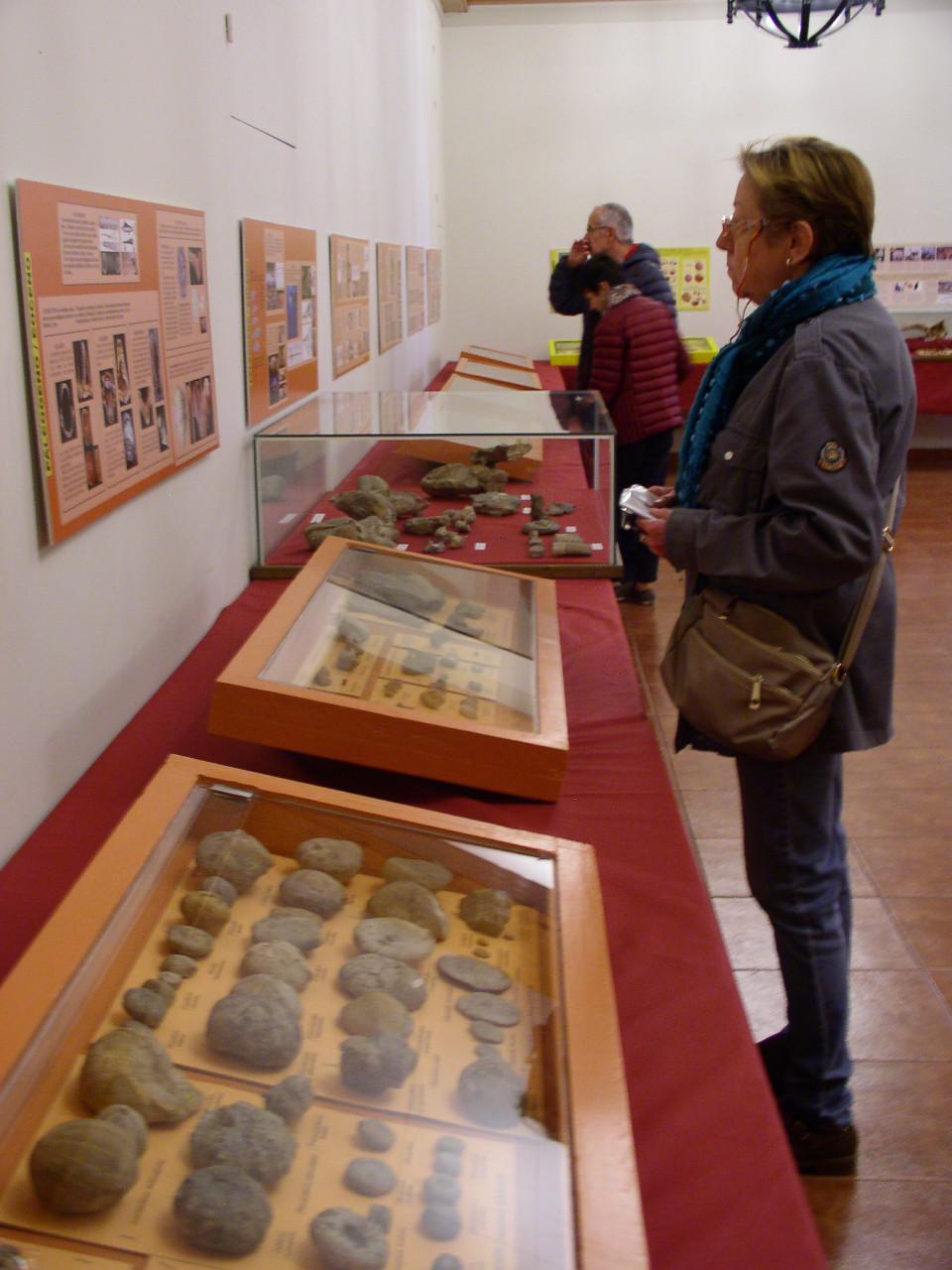Exposición especies de la transversal pirenaica y algunas cosas más _p101026