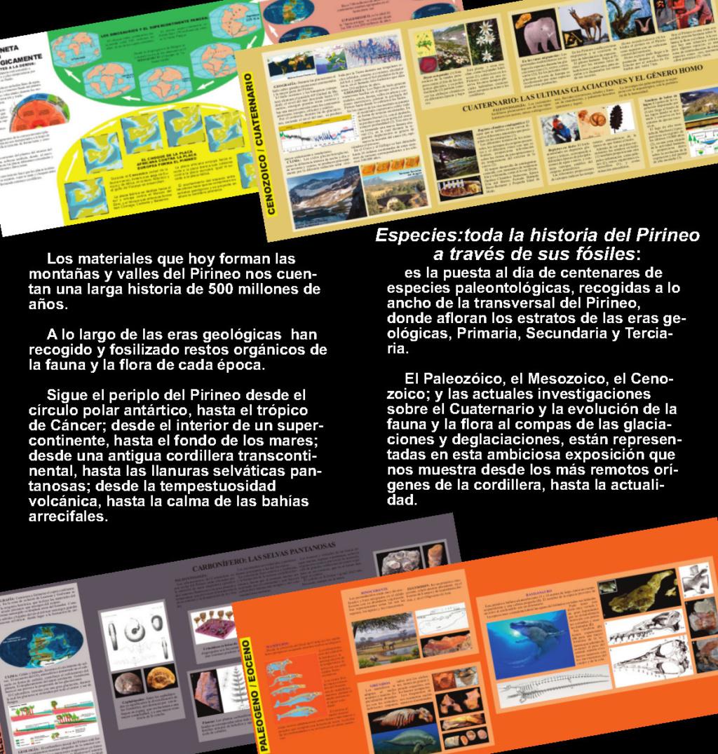 Exposición especies de la transversal pirenaica y algunas cosas más Diptic12