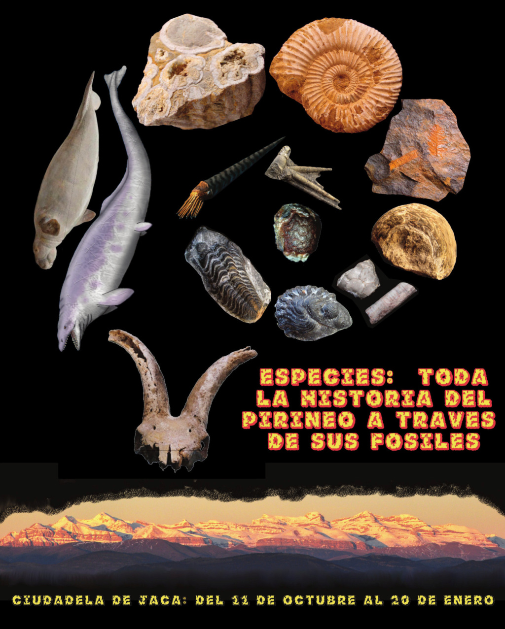 Exposición especies de la transversal pirenaica y algunas cosas más Poster10
