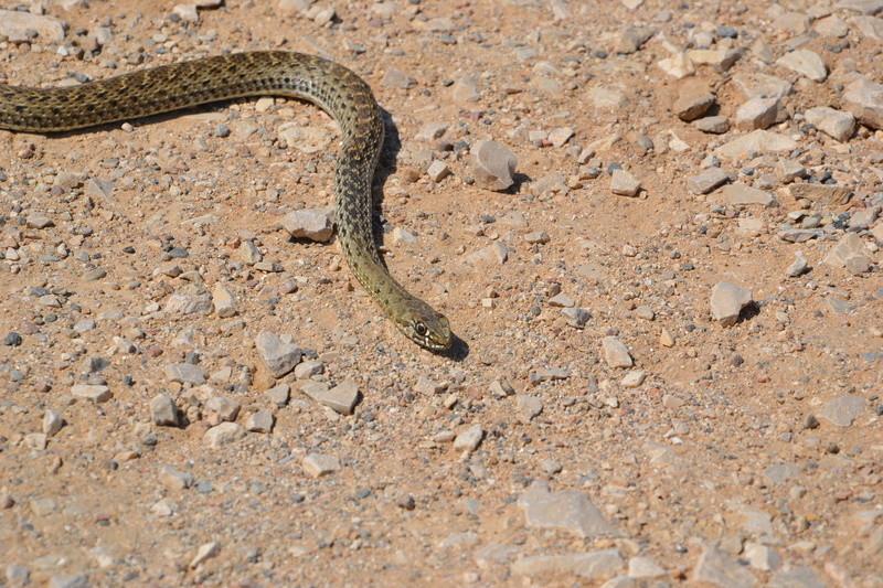 Serpent Dsc_0124