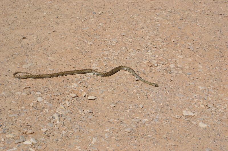 Serpent Dsc_0125