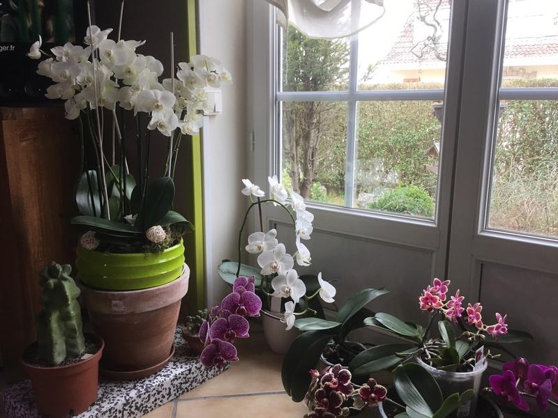 Floraison des orchidées de juin à........... - Page 4 Img_2011