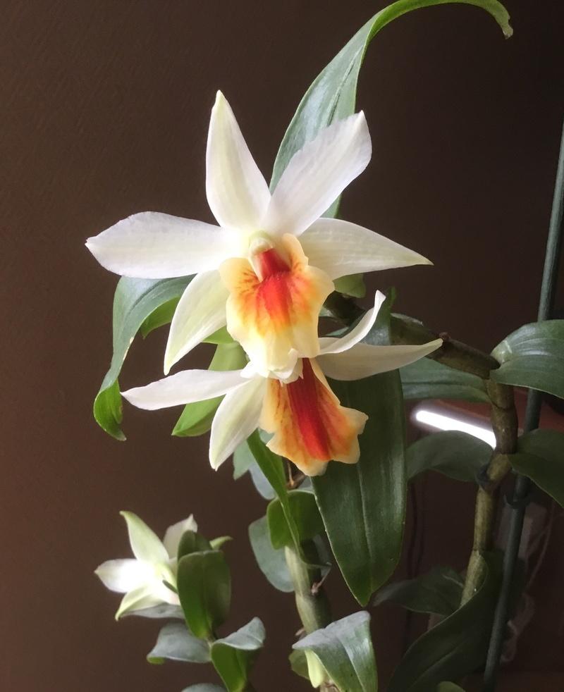 Floraison des orchidées de juin à........... - Page 4 Img_2515