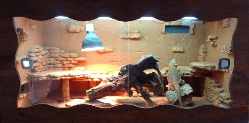 Futurs terrariums, futurs reptiles. Terra10