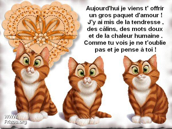 citation du jour/celebres et images de colette - Page 5 Aujour11