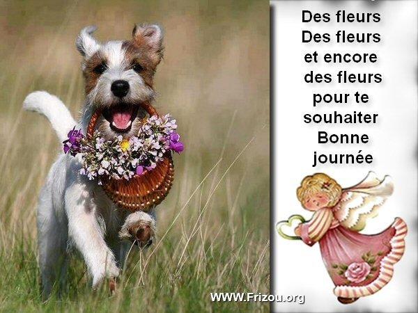 citation du jour/celebres et images de colette - Page 5 Des_fl10