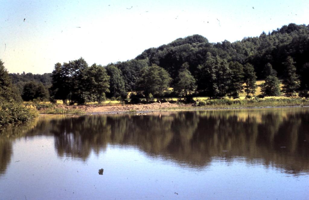 Naissance et adolescence de mon étang 3-1-2012