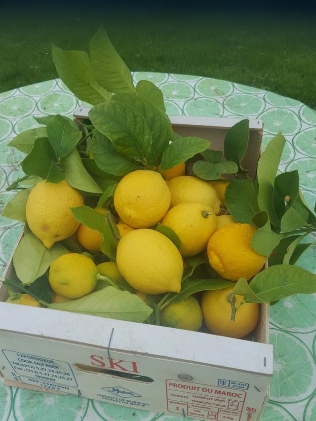 Citrus limon - citronnier des quatre saisons - Page 2 Citron10
